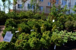 Садовый центр Кемерово
