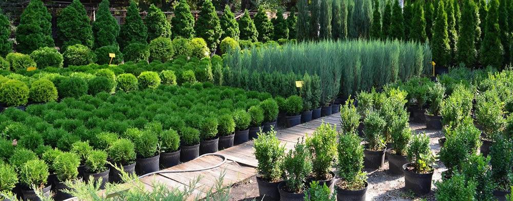 Купить растения в интернет-магазине