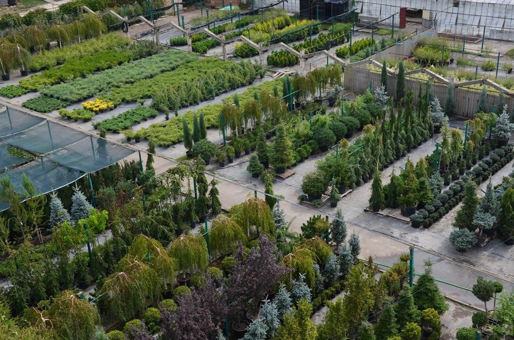 Питомники растений в области