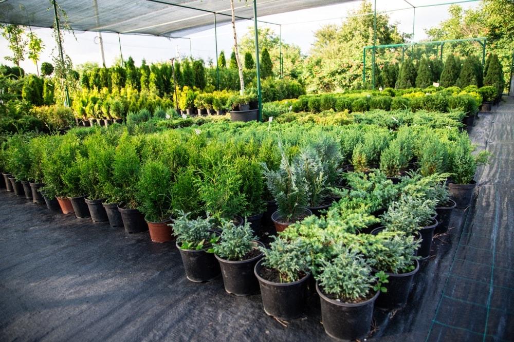 Купить деревья в интернет-магазине недорого