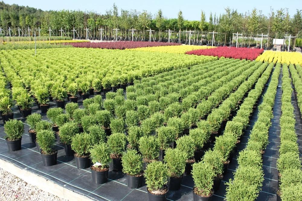 Интернет-магазин растений и деревьев