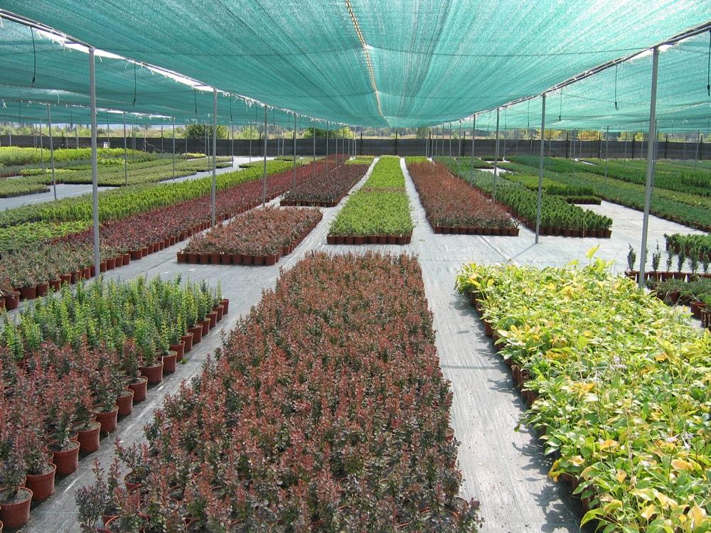Сайты питомников растений