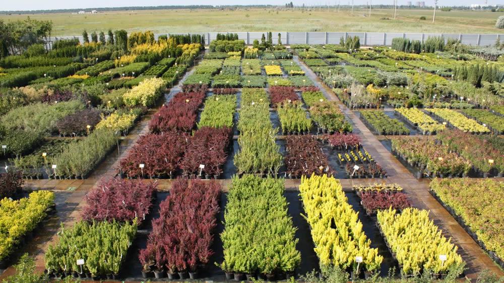 Питомники садовых растений