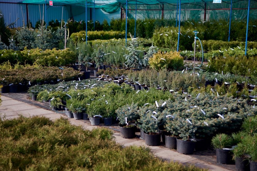 Официальный сайт питомника растений