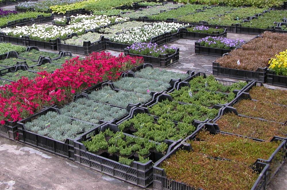 Каталог растений питомника