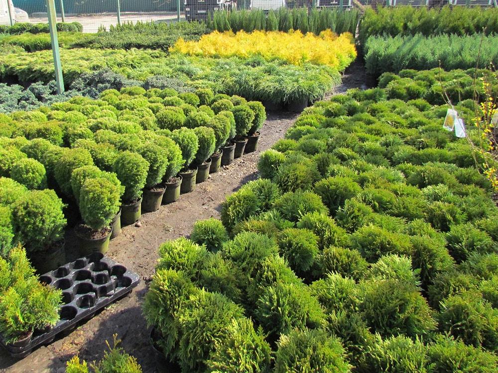 Интернет-магазин садовых растений