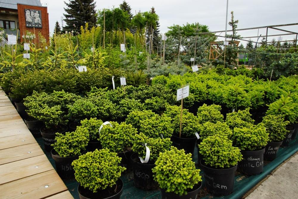 Питомник растений и деревьев