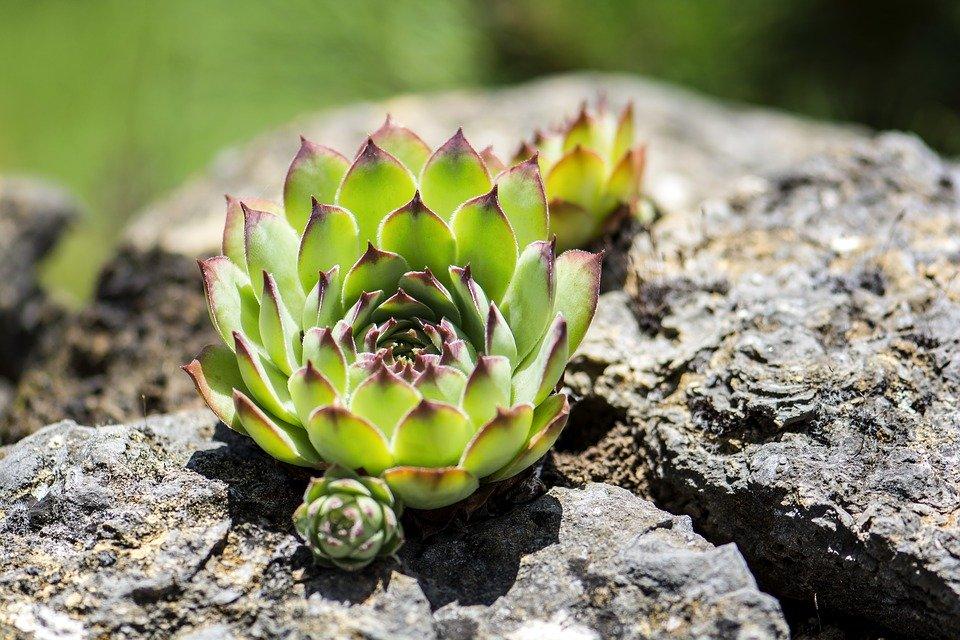 Обустройство сада растениями
