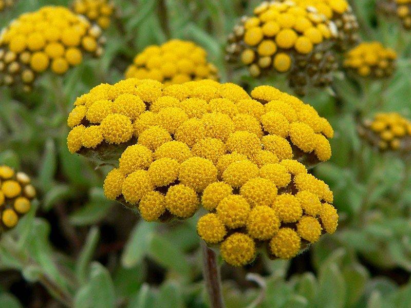 Доставка растений в Новосибирске