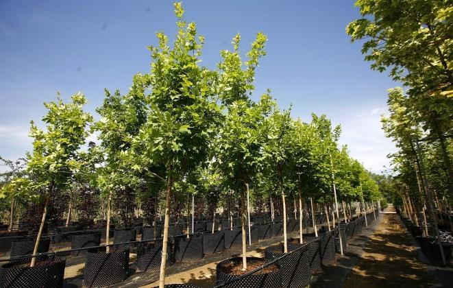Набор предзаказов на поставку растений и деревьев на 2021 год