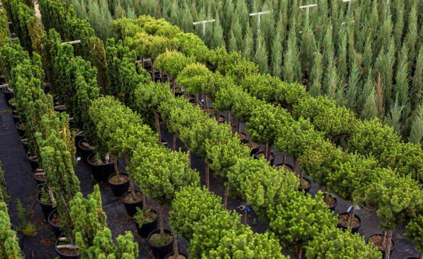 Многолетние травянистые растения оптом и в розницу