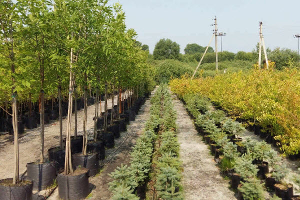 Плодовые кустарники в широком ассортименте