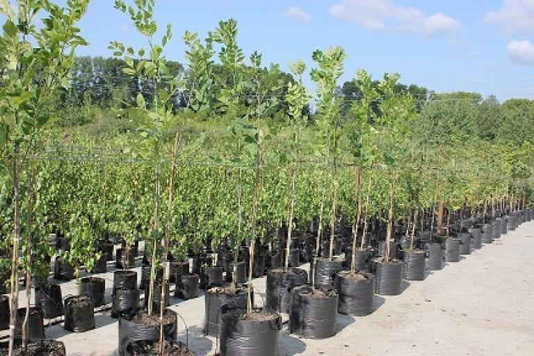 Плодовые деревья для вашего сада