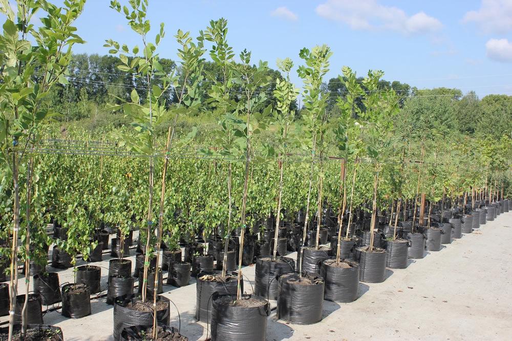 Грядет повышение цен на деревья и растения! Еще можно купить их по ценам 2020 года!