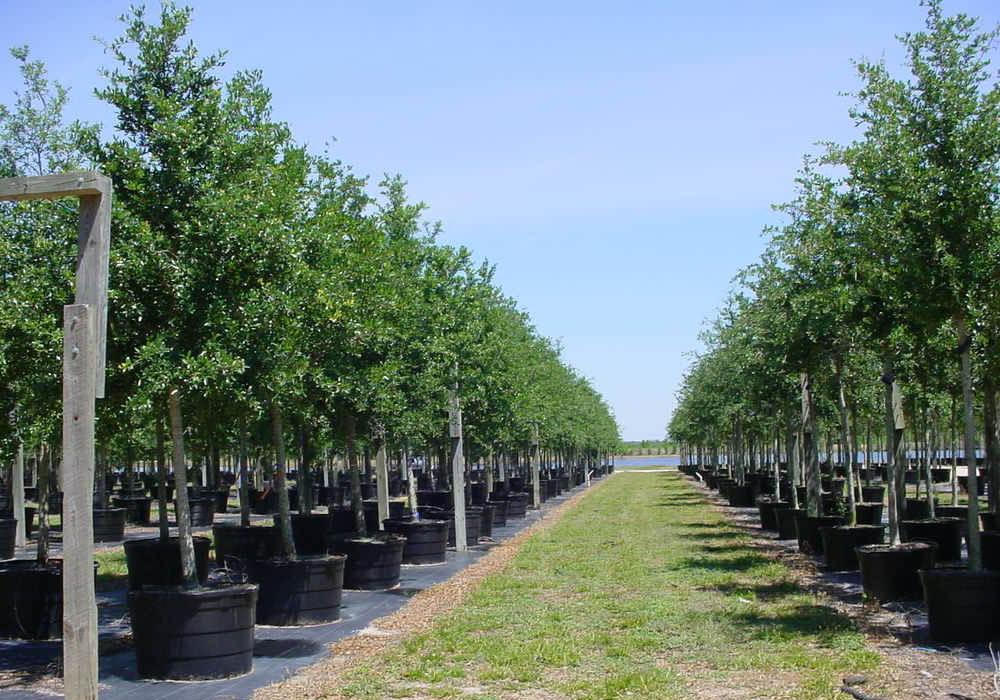 Актуальный каталог питомника растений «Флора»