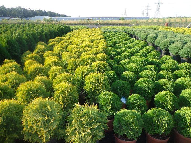 Питомник растений в Новосибирске
