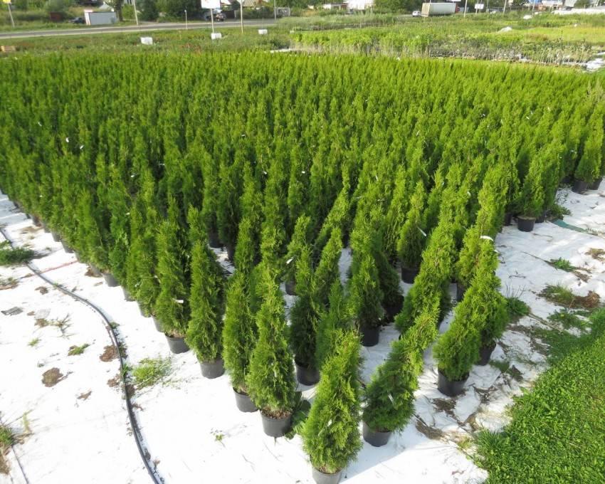 Питомник растений в Кемерово