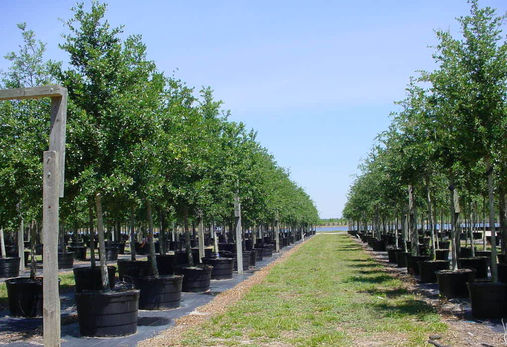 Цены на плодовые деревья