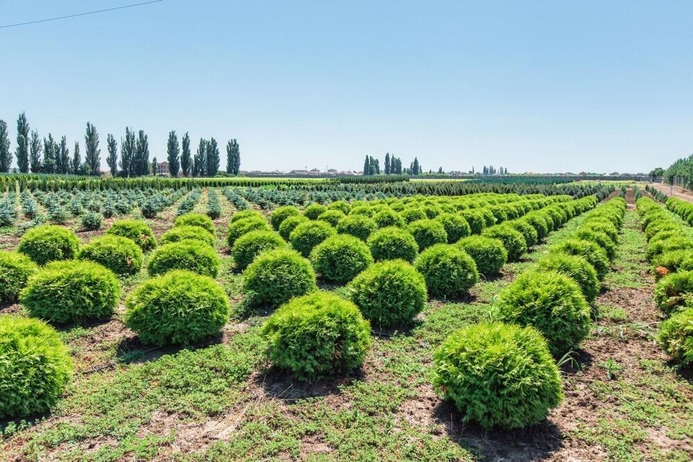 Растения из питомника